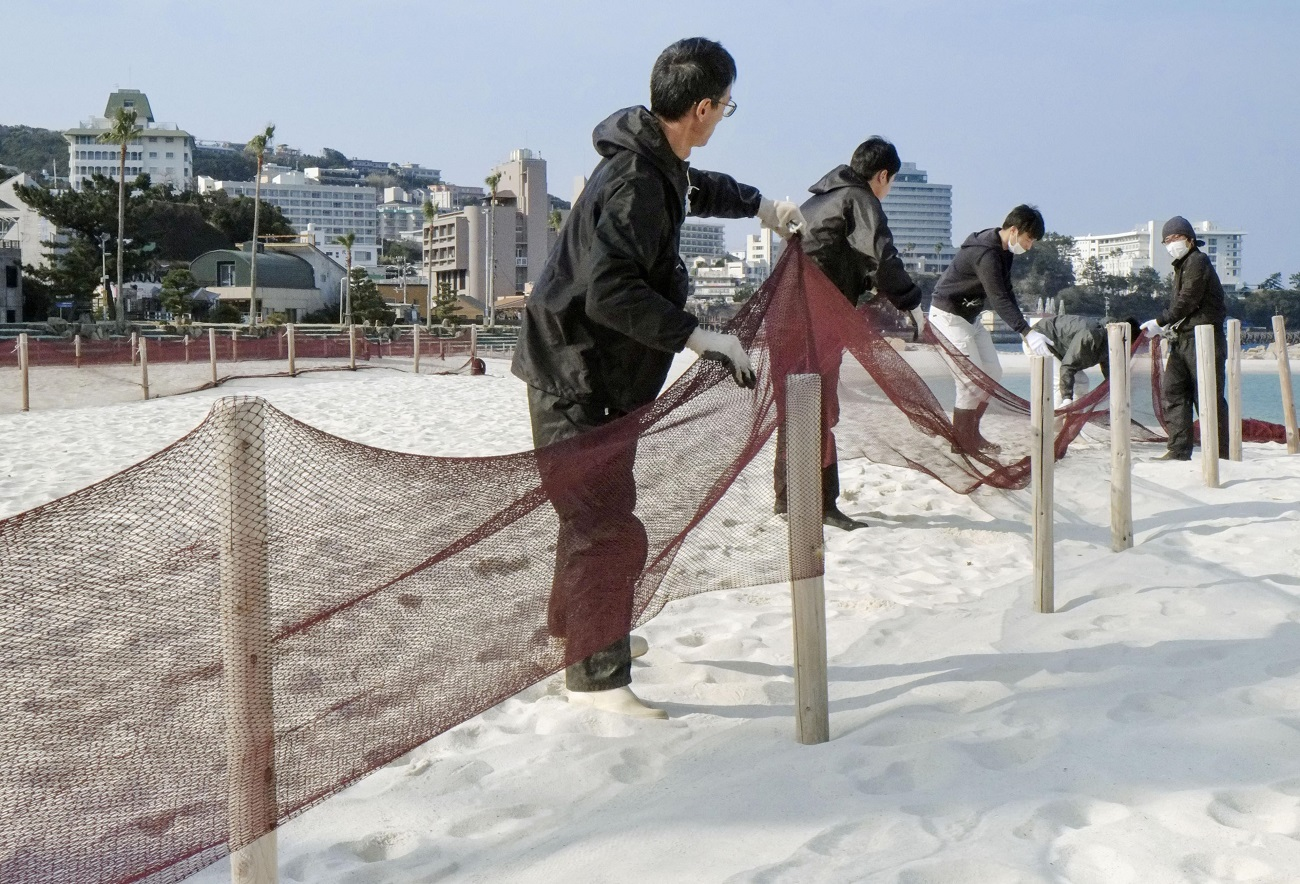 Unusual Sight in Shirahama Freeing the Sand from Winter Nets