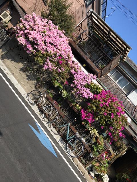 Julian bicycle trip Kyushu 1