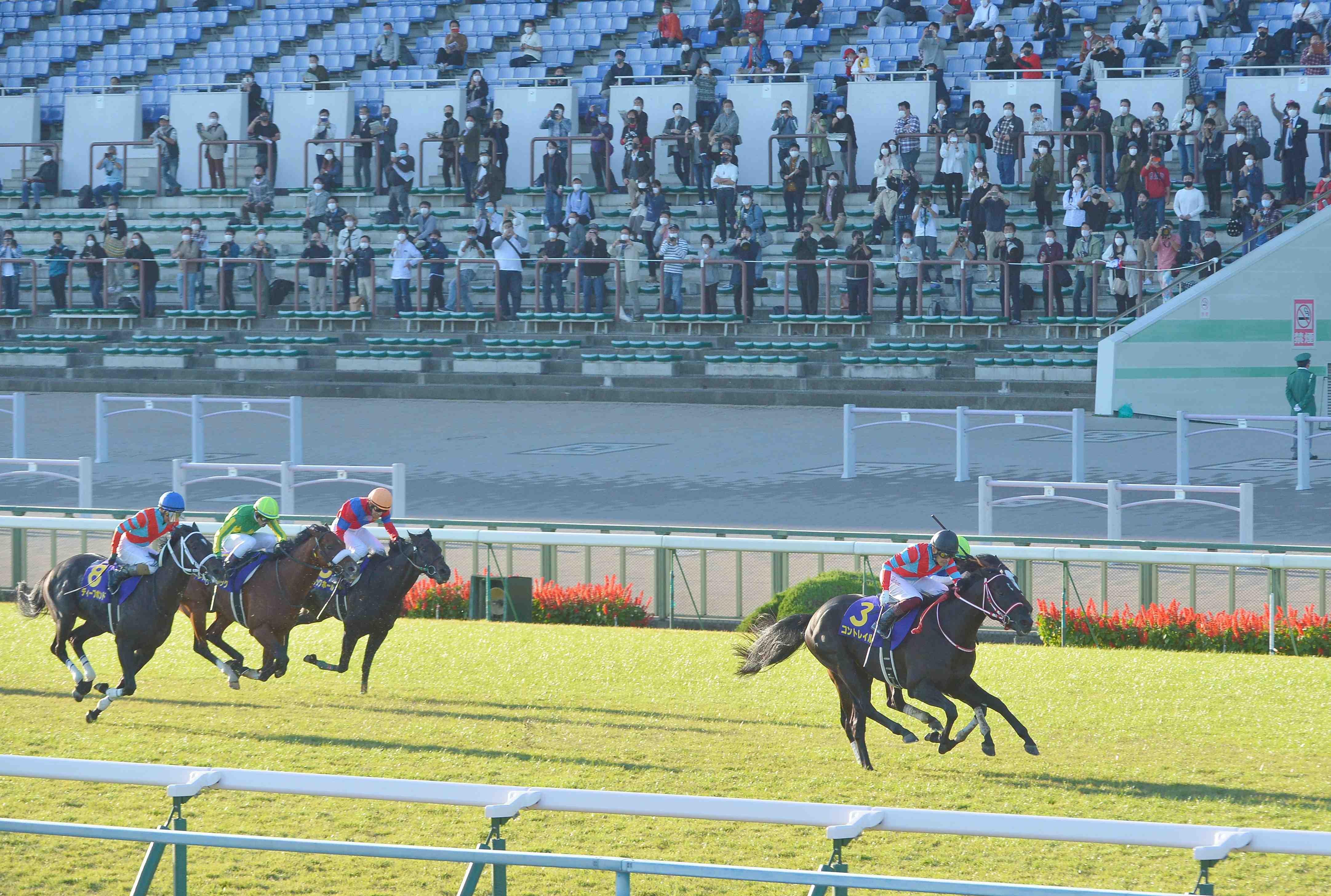 Horse Racing Kikkasho Triple Crown Winner Contrail 001