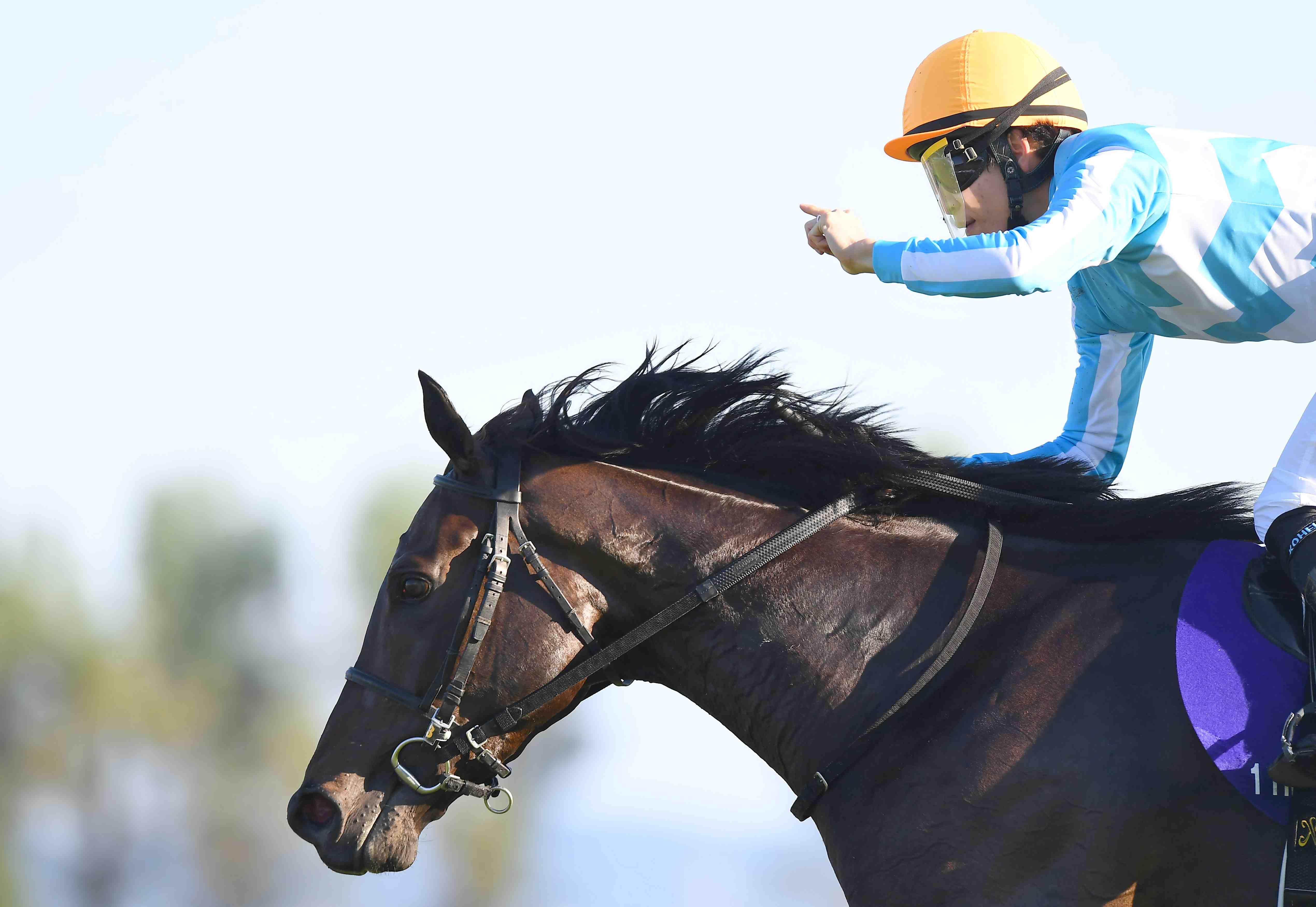 Horse Racing Kyoto Shukasho Triple Crown Winner Daring Tact