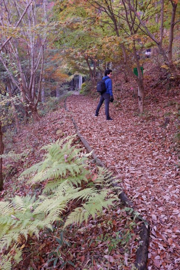 37 autumn path to-bathing-area–ehk-dscf4503