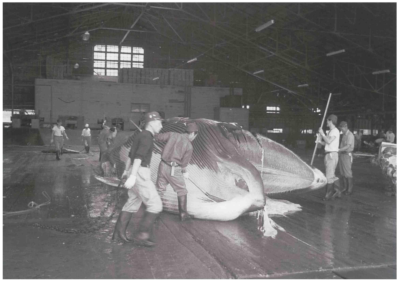 Oshika Whale Land in Miyagi Prefecture at Tohoku Region 008