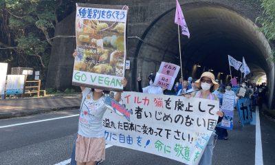 Vegan Protestor at March in Taiji, Wakayama
