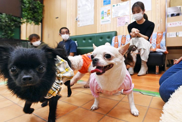 [Corona ni Makeruna] Shelter Dog Cafe: Happiness is Being Together